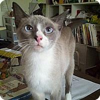 Adopt A Pet :: Raggedy Ann - Ocala, FL