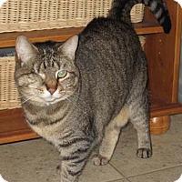 Adopt A Pet :: Winky - Merrifield, VA