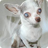 Adopt A Pet :: Tila - Umatilla, FL
