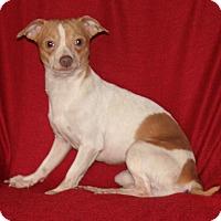 Adopt A Pet :: Shae - Umatilla, FL