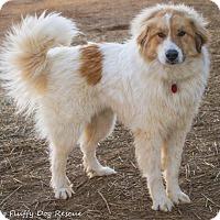 Adopt A Pet :: Sampson - Enfield, CT