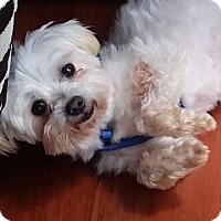 Adopt A Pet :: Princey*Adopted - West Harrison, NY