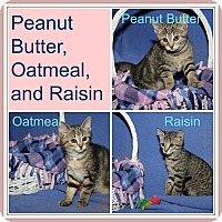 Adopt A Pet :: Peanut Butter/Oatmeal/Raisin - Marietta, OH
