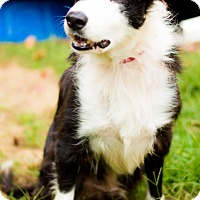 Adopt A Pet :: Patch - West Hartford, CT