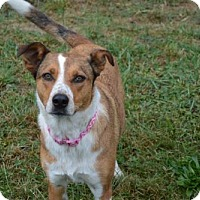 Adopt A Pet :: Franny - Washougal, WA