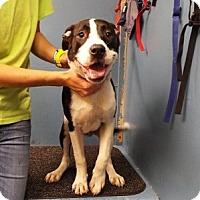 Adopt A Pet :: Riley - Chalfont, PA