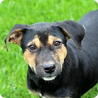 Adopt A Pet :: Webble - Liberty Center, OH