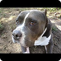Adopt A Pet :: Lucky - grants pass, OR
