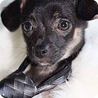 Adopt A Pet :: Murtaugh - Wichita, KS