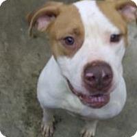 Adopt A Pet :: Goofy - Upper Sandusky, OH