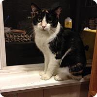 Adopt A Pet :: Amber Chanel - Visalia, CA