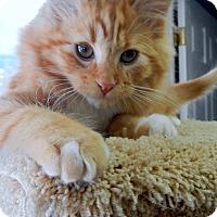 Adopt A Pet :: Norman - Creston, BC