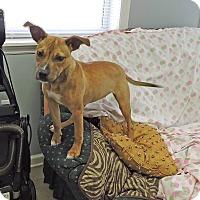 Adopt A Pet :: Ranger Girl - Washington, GA