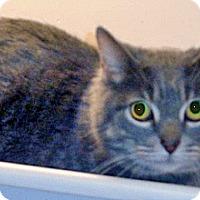Adopt A Pet :: Merlin - Wildomar, CA