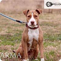 Adopt A Pet :: Karma - DeForest, WI