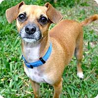 Adopt A Pet :: Pick me, Pick me!!! - Ft Myers Beach, FL