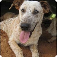 Adopt A Pet :: Freckles - Nacogdoches, TX
