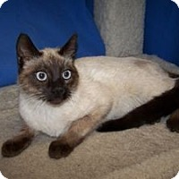 Adopt A Pet :: Genet - Colorado Springs, CO