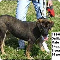 Adopt A Pet :: Gulliver - FOUND BY OWNER - Zanesville, OH