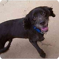 Adopt A Pet :: Jo Jo - York, SC