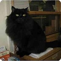 Adopt A Pet :: Divine - Mission, BC