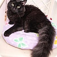 Adopt A Pet :: Gabrino - Shelton, WA