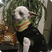 Adopt A Pet :: Lacy - Copperas Cove, TX