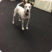 Adopt A Pet :: Violet - Jupiter, FL