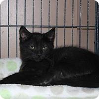 Adopt A Pet :: Hutch - Caistor Centre, ON