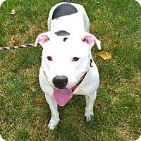 Adopt A Pet :: Rascal adoption pending - East Hartford, CT