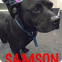 Adopt A Pet :: Samson - Waycross, GA