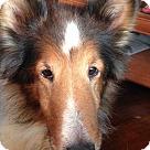 Adopt A Pet :: Meg