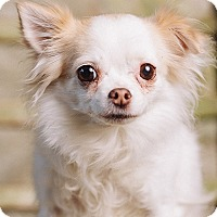 Adopt A Pet :: Tiny - Portland, OR