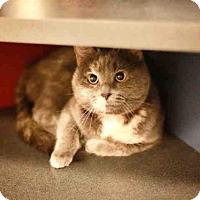 Adopt A Pet :: PANCAKE - Murray, UT