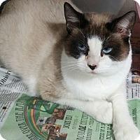 Adopt A Pet :: Newman - Anderson, SC
