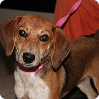 Adopt A Pet :: Clementine - Harmony, Glocester, RI