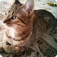 Adopt A Pet :: Nola - Toronto, ON