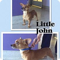 Adopt A Pet :: Lil Jon - Scottsdale, AZ