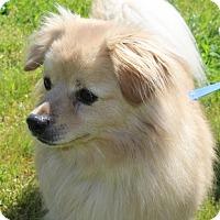 Adopt A Pet :: Parker - Grants Pass, OR