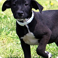 Adopt A Pet :: Lennox - Glastonbury, CT