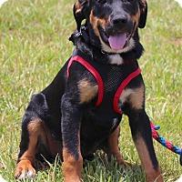 Adopt A Pet :: Tilli - Bedford, VA
