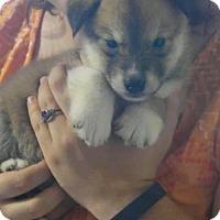 Adopt A Pet :: Porkchop - Roswell, GA