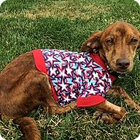 Adopt A Pet :: Stevie - Plainfield, IL