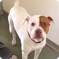 Adopt A Pet :: Paulie - Charlottesville, VA