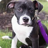Adopt A Pet :: Willow - Grand Rapids, MI