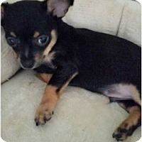 Adopt A Pet :: Baby Buster - Hillside, IL