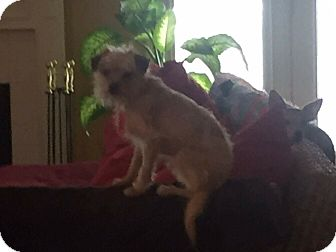 Terrier (Unknown Type, Small) Mix Dog for adoption in LEXINGTON, Kentucky - Willie