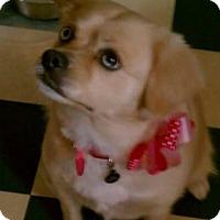 Adopt A Pet :: Zoe - Whittier, CA
