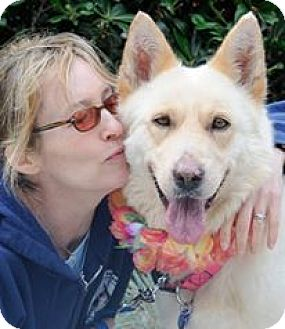 Samoyed/German Shepherd Dog Mix Dog for adoption in LA, California - Clementine