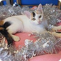 Adopt A Pet :: Sara - Glendale, AZ